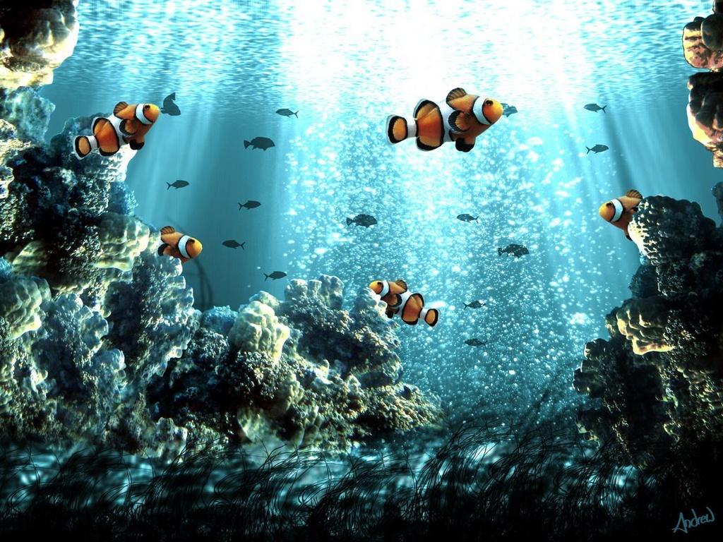 18 подводный мир 12 46 подводный мир